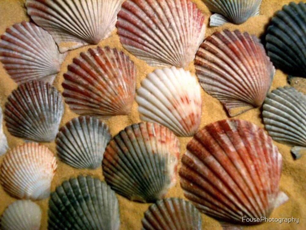 Seashells II by FousePhotography
