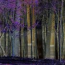 A Forest of Reflections by Sarah Moore