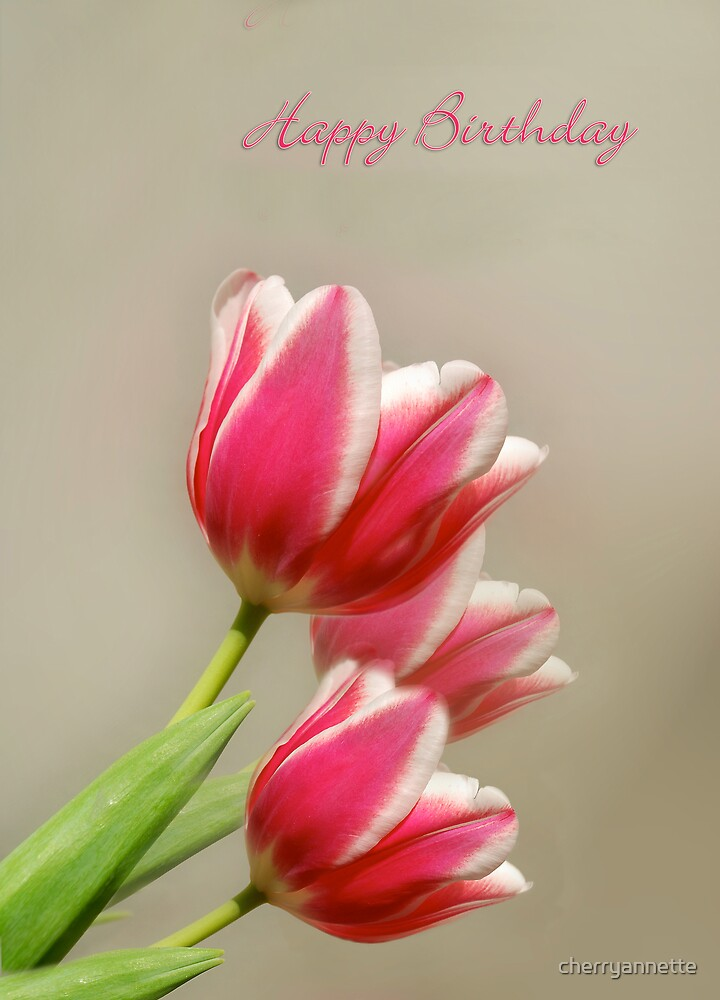 Tulip Trio Birthday card by cherryannette