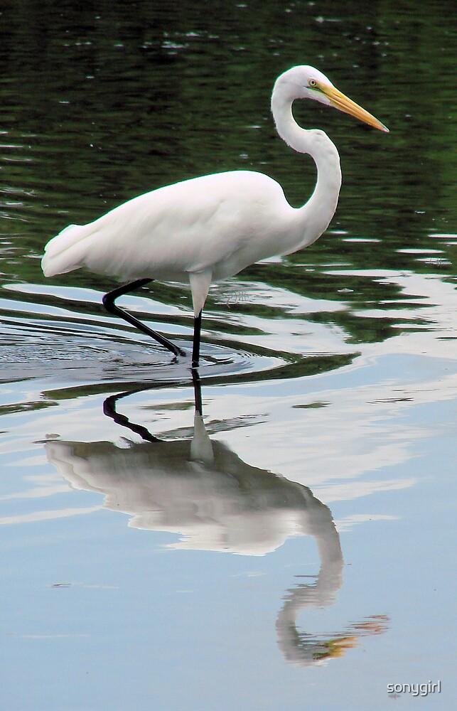 egret by sonygirl
