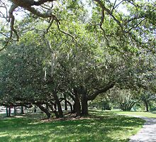 sidewalk thru trees by sonygirl