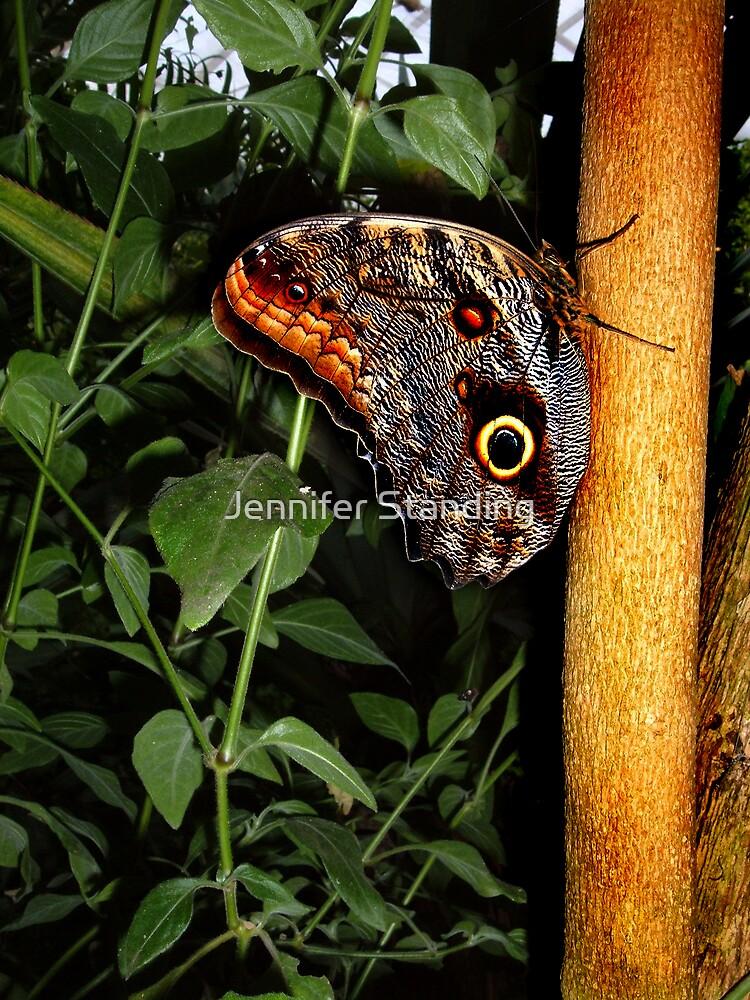 Butterfly on Tree Branch by Jennifer Standing