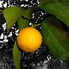 Lonely orange on tree by Jennifer Standing