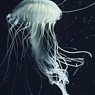 jelly fish dance by Marianna Tankelevich
