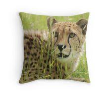 Cheeta 4 Throw Pillow