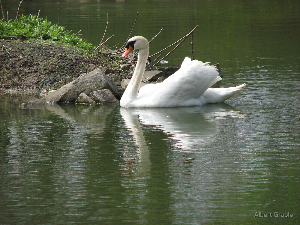 A Swim Of The Swan by Albert Grable