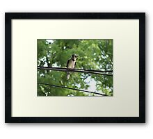 Blue Jay On A Wire Framed Print