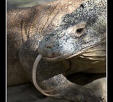 Komodo Dragon by Gerard Delany