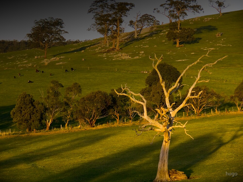 LYSTERFIELD LATE AFTERNOON by hugo