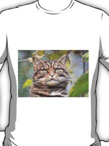 Highland Tiger T-Shirt