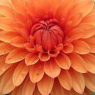 Dahlia details in orange by bubblehex08