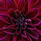Purple Velvet by Karen  Betts