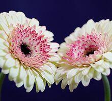 twins by Nicole W.