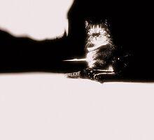 heavens cat by jram1203