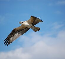 Learning to fly III by John Pacifico