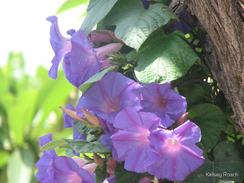 purple haze by Kelsey Roach