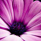 Purple Cascade by craigNdi