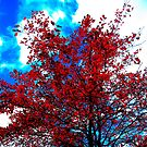 fall color in Oz by Gus Buckner