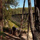 Trestle Bridge Colquhoun State Forest by Joe Mortelliti