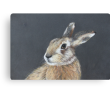 the hares stare Canvas Print