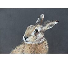 the hares stare Photographic Print