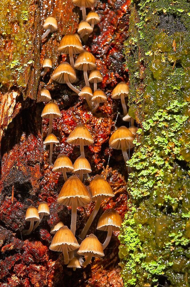 Fungi by Neil