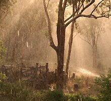 Bocoble Sun Shower by Bronwyn  Murphy