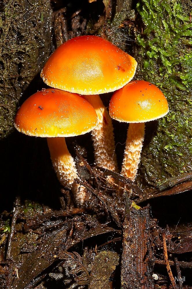 fungi 4 by Neil