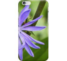 Single Purple Chicory Flower iPhone Case/Skin