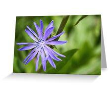 Single Purple Chicory Flower Greeting Card
