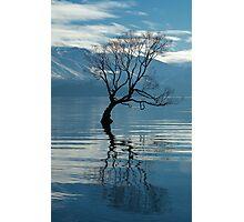 That Tree Photographic Print