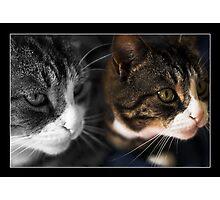 Cats Photographic Print