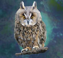 Young Long Eared Owl by Bamalam Art and Photography