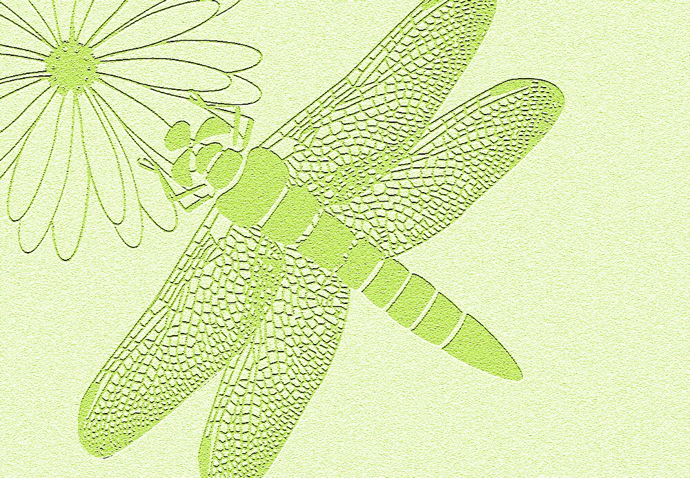 dragonfly in green by Carolyn