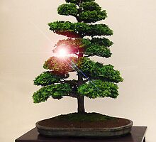 Bonsai by CarolineMannix