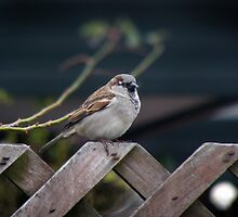 Fatty On da Fence by Lee Malzard