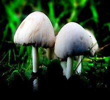 A pair of Mushrooms by Lee Malzard