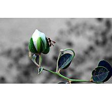 A beautiful pair Photographic Print