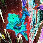Rained on my Iris by Peter Fenna