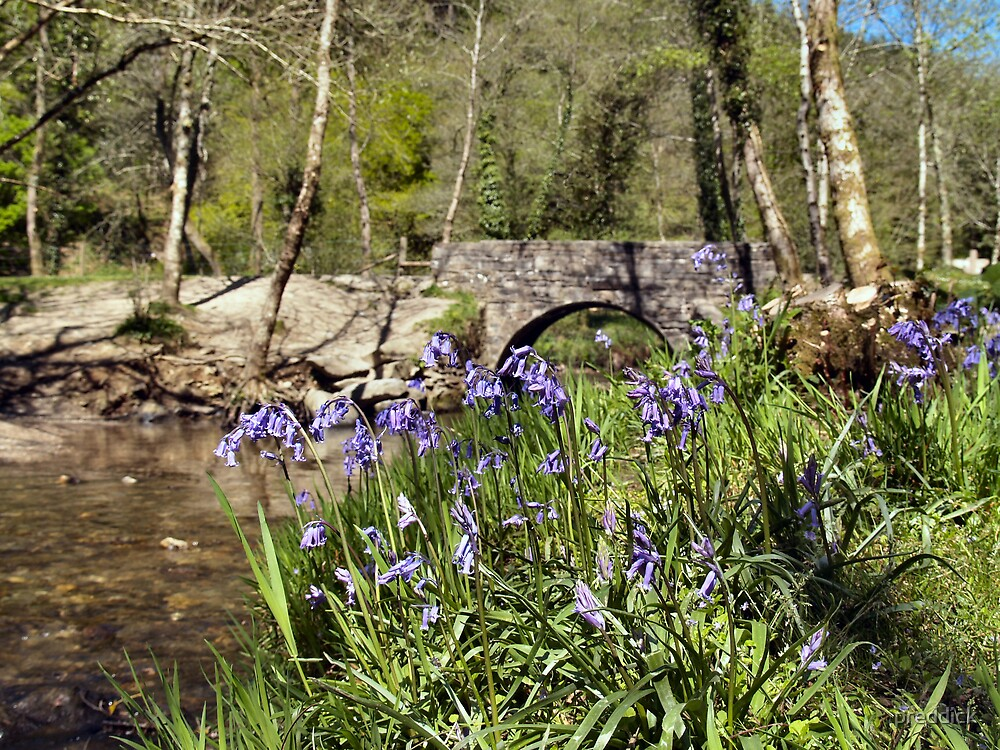 bluebell woods by preddick