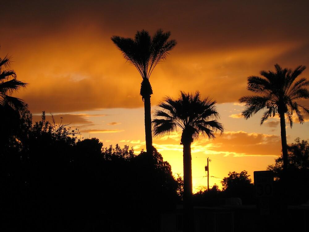 Phoenix Sunset by Samantha Lowe