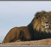 Lion by Samantha Lowe