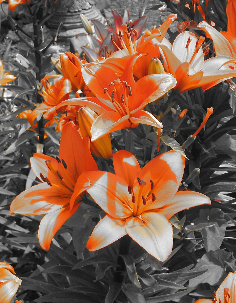 Orange by Samantha Lowe