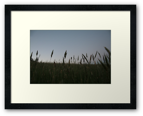 Grasses by Jonathan Russell