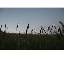 Grasses Photographic Print
