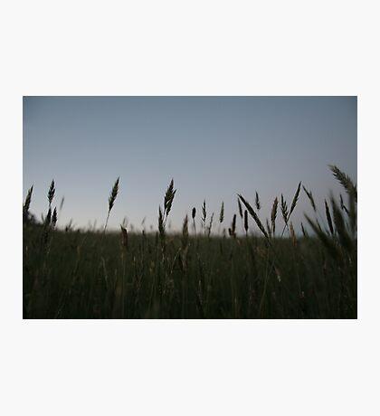 Grasses Photographic Print