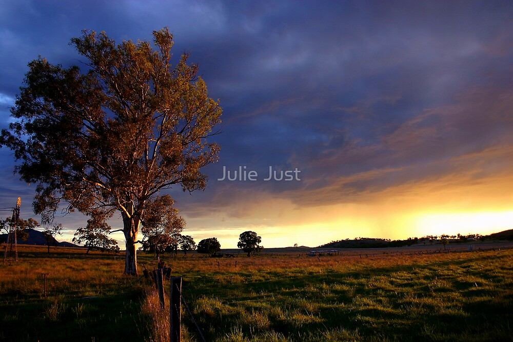 The paddock by Julie Just