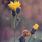 Daybreak Early Bright Dandelions Perspective by MissDawnM