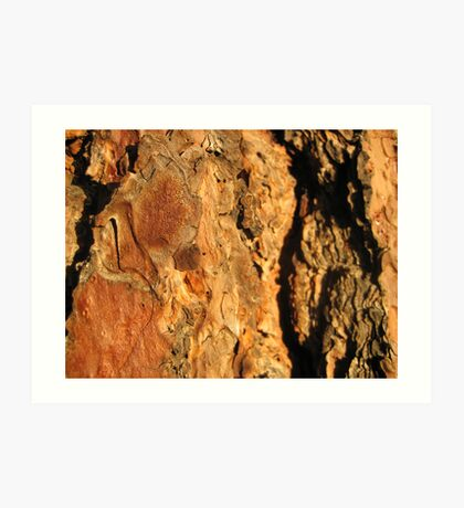 Sunset Bark Pondersoa Pine Art Print