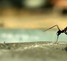 Piss Ant by Craig Shillington